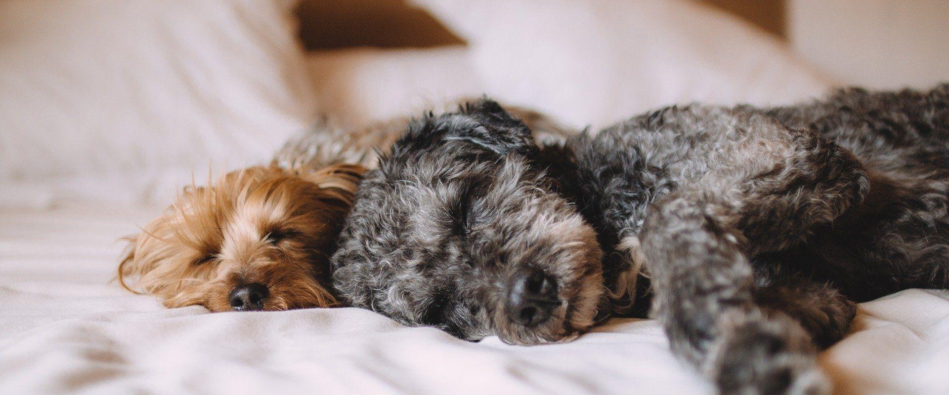 hundefreundlich hunde willkommen Maximilian Munich Apartment Hotel München